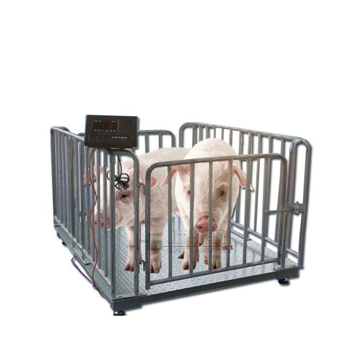 动态带打印电子牲畜秤,不锈钢围栏电子秤